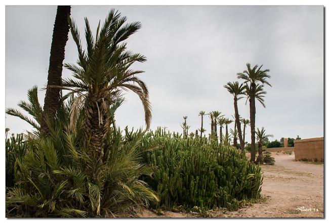 Frondositat en el desert