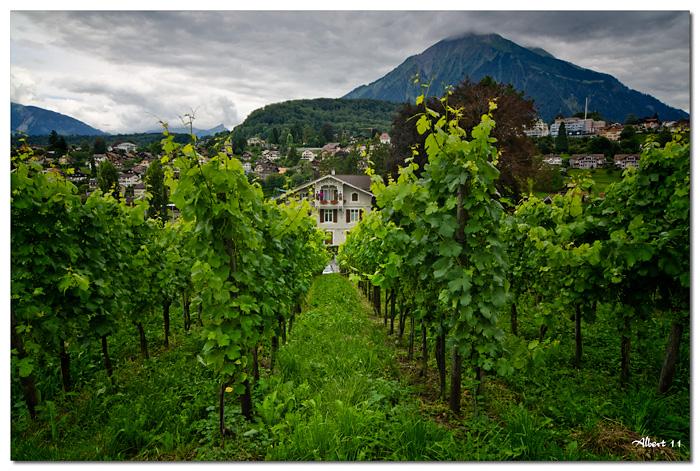 Casa amb vinyes